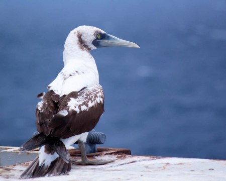 Can you identify this seabird?